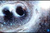 """Onde gravitazionali: """"le abbiamo trovate"""""""