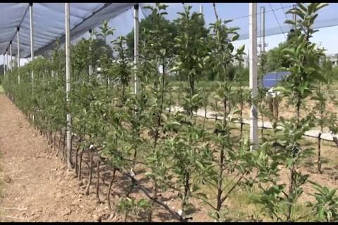 Demo Field, il progetto per una produzione agricola sostenibile