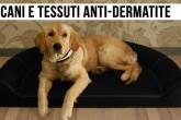 Dermatite nei cani? Il problema è risolto
