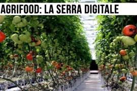Serra digitale, il cervello elettronico che si prende cura delle piante