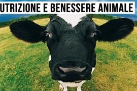 La soluzione alimentare che rinforza le difese immunitarie delle vacche da latte