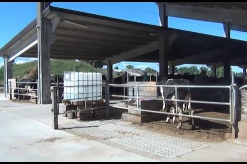 Stalla 2.0: collari smart per monitorare la salute delle vacche