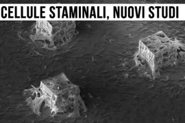 Stimoli meccanici per differenziare le cellule staminali