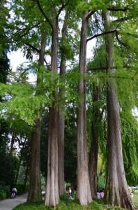 Alberi secolari di Villa Erba