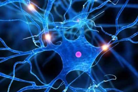 sclerosi multipla cervello
